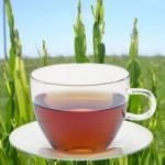 chá de carqueja